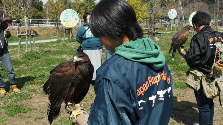 猛禽類の展示(流山市生涯学習センター)02.JPG